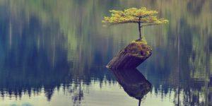 Fotografía ejemplo de resiliencia